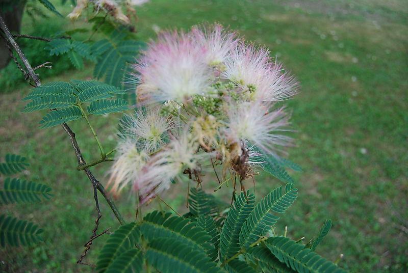 Pink fluff ball