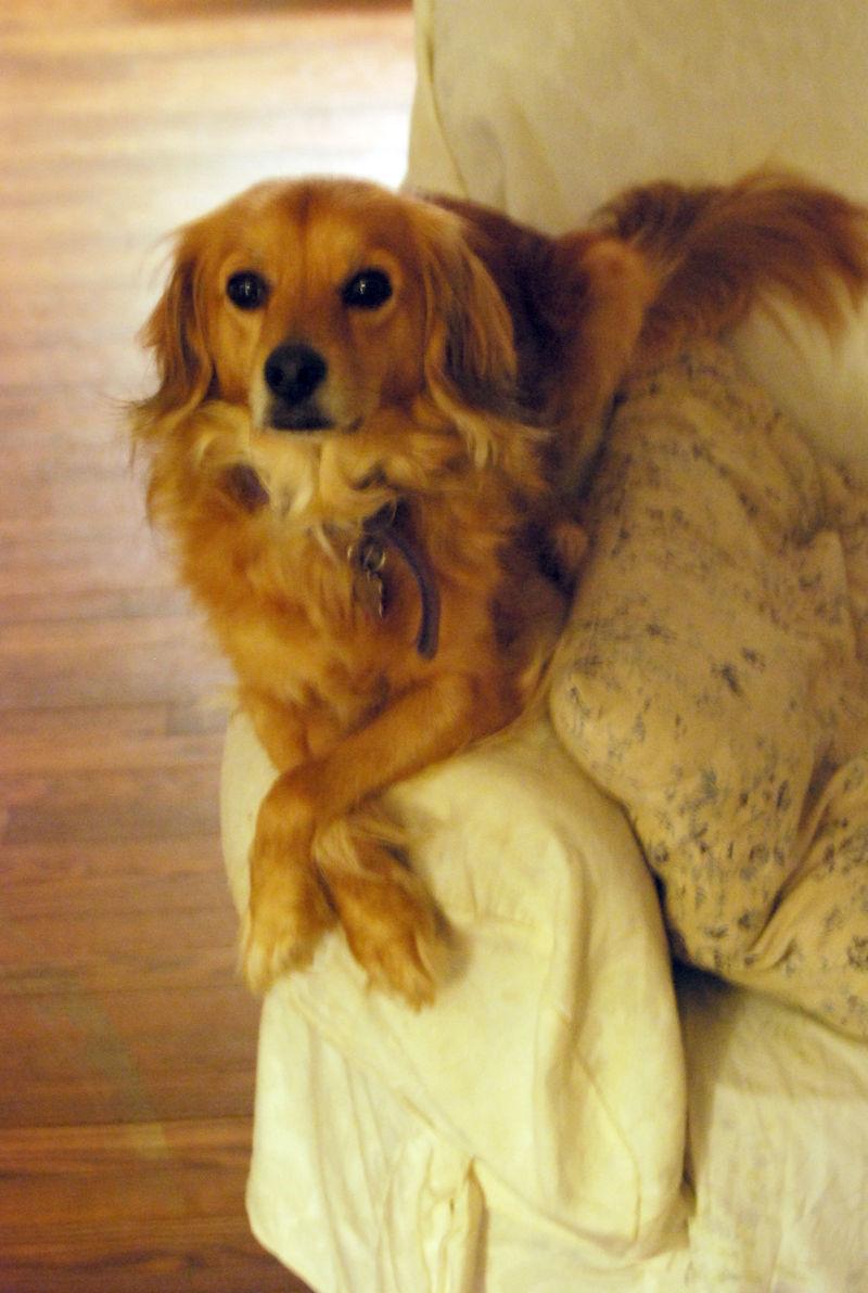 Sarah christmas 2008 1