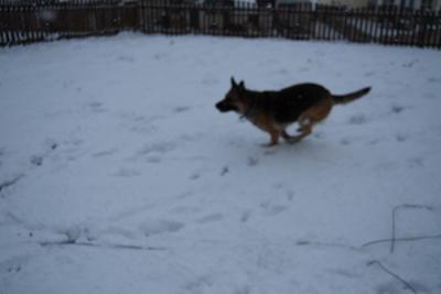 Snow_day_0297